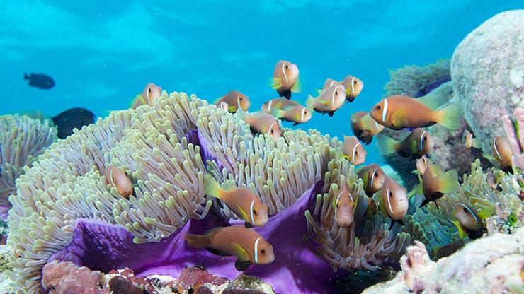 Scuba Diving Courses - Life Butler